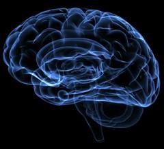 Neuroimagem aprofunda estudo do cérebro