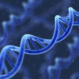 oncogenetica