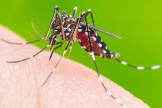 Dengue, Chikungunya e Zika continuam a fazer vítimas em 2018
