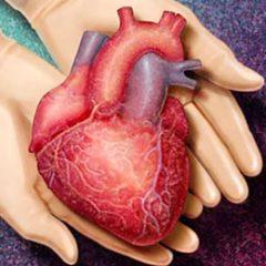 Brasil faz apenas 23% dos transplantes de coração necessários