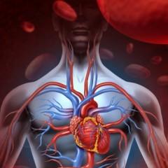 Hipertensão, prevenção e tratamento