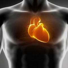 Infarto e AVC: os acidentes vasculares mais comuns da vida moderna