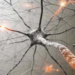 Falta de sono pode provocar perda de neurônios