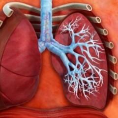 Os Pulmões e a Respiração